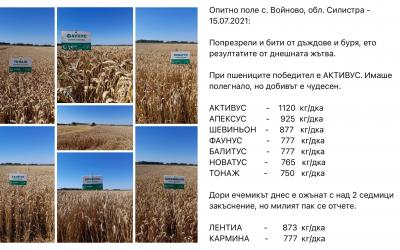 Опитно поле с. Войново, обл. Силистра - 15.07.2021
